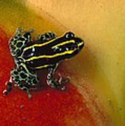 Phantasmal Poison Dart Frog Art Print