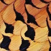 Pheasant Plumage Art Print