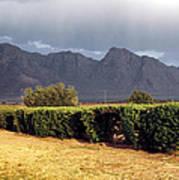 Picacho Peak Hedge Art Print