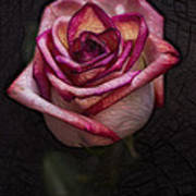 Picturesque Satin Rose Art Print