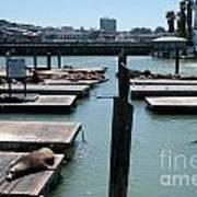 Pier 39 San Francisco Art Print