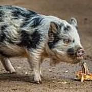 Pig With An Attitude Art Print