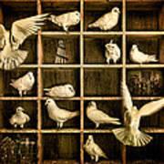Pigeon Holed Art Print