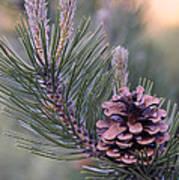 Pine Cone At Sundown Art Print