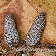 Pine Cones And Leaves Art Print by Deborah Benoit