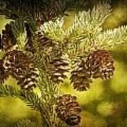 Pine Cones No.056 Art Print