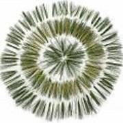 Pine Needle Flower Art Print by David Esslemont