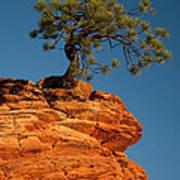 Pine On Rock Art Print