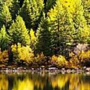 Pine Reflection At Georgetown Lake Colorado Art Print