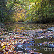 Pine River In Fall Art Print