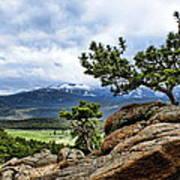 Pine Tree And Mountains Art Print