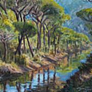 Pine Wood Reflections Art Print