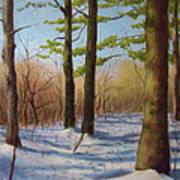 Pines In Winter Art Print
