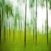 Pines Art Print