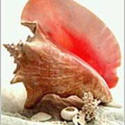 Pink Cong Shell Art Print