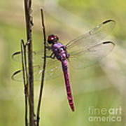 Pink Dragonfly With Sparkly Wings Art Print