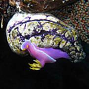 Pink Durid Nudibranch Art Print