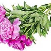 Pink Floral Summer Art Print