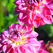 Pink Flower Pair Art Print
