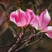 Pink Flower Tree Blossoms No. 247 Art Print