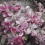 Pink Flowering Crabapple And Grunge Art Print