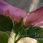 Pink Hibiscus 2 Art Print