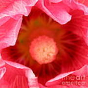 Pink Hollyhock 2 Art Print