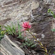 Pink Mountain Flower Art Print