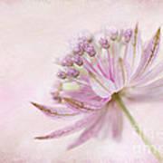 Pink Palette Art Print by Jacky Parker