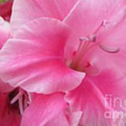 Pink Perfusion Art Print