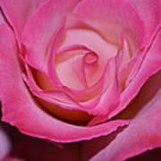 Pink Rose Art Print by Saifon Anaya