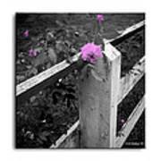Pink Touch Art Print