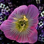 Pink Wildflower  Art Print