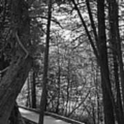 Pintail Trail2 Art Print