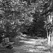 Pintail Trail3 Art Print