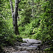 Pisgah Path Art Print