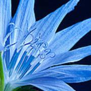 Pistil's Of Chicory Art Print
