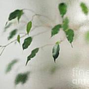 Plant Behind Glass Art Print