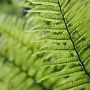 Plant Detail, Close Up Art Print