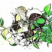 Plant Falls Art Print