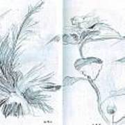 Plant Sketches Art Print