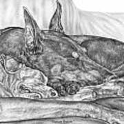 Pleasant Dreams - Doberman Pinscher Dog Art Print Art Print by Kelli Swan