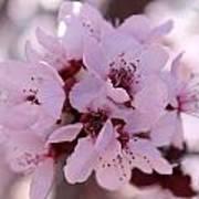 Plum Blossoms 4 Art Print