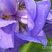 Poetry Of An Iris Art Print