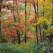 Point Beach State Forest Art Print
