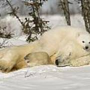 Polar Bear With Cub In Snow Art Print