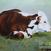 Polled Hereford Baby Art Print