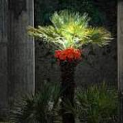 Pompeii Palm Tree Italy Art Print