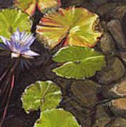 Pond Flower Art Print