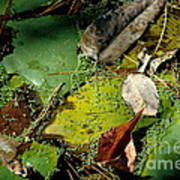 Pond Lumens Art Print